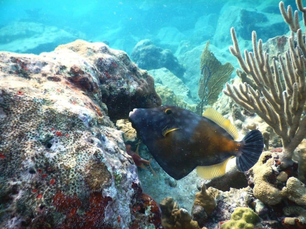 snorkeling in the caribbean, tropical fish, day trip to the bvi