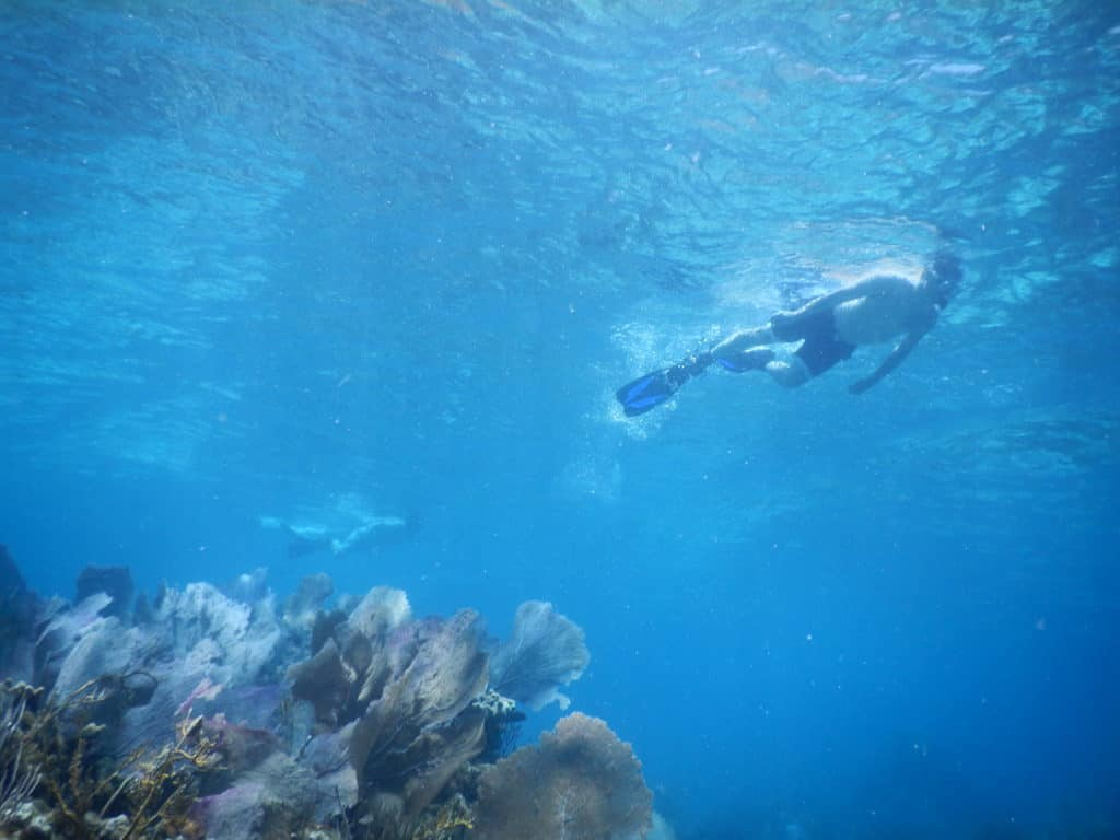 A Day of Snorkeling in the Virgin Islands | Aqua Blue Charters
