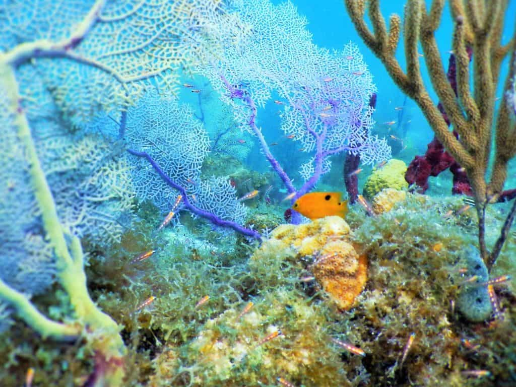 snorkel, snorkeling, Virgin Islands, US Virgin Islands, British Virgin Islands, BVI, snorkel trips, day trips to the BVI, st thomas boat rental, st john boat rental, charter boats to the BVI, day charter to the BVI, soggy dollar bar, Willy T